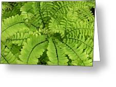 Maidenhair  Greeting Card