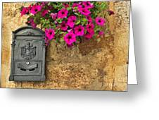 Mailbox With Petunias Greeting Card by Silvia Ganora