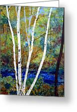 Maine Birch Stream Greeting Card