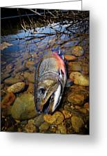 Maine Brookie Greeting Card