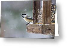 Maine Chickadee Greeting Card