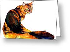 Maine Coon Cat Portrait Greeting Card by Christy  Freeman