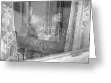 Maine Coon In Window Greeting Card