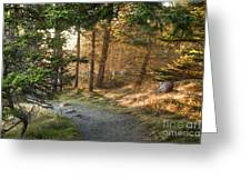 Maine Forest At Dusk Greeting Card