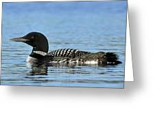 Maine Loon Greeting Card