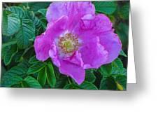 Maine Rose Greeting Card