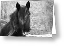 Majestic Beauty Bw Greeting Card