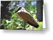 Majestic Bird Greeting Card