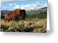 Majestic Bison Greeting Card