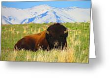 Majestic Buffalo  Greeting Card