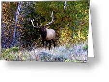 Majestic Bull Elk Survivor In Colorado  Greeting Card