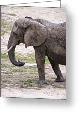 Majestic Elephant  Greeting Card