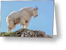 Majestic goat photograph by marv vandehey majestic goat greeting card m4hsunfo