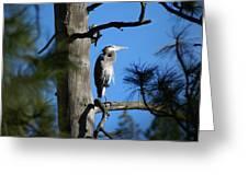 Majestic Great Blue Heron 1 Greeting Card