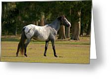 Majestic Horse Greeting Card