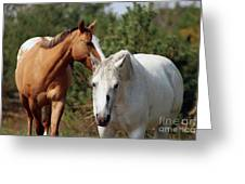 Majestic Horse Ride Greeting Card