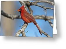 Majestic Mr. Redbird Greeting Card