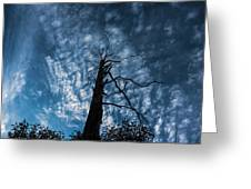 Majestic Nature On Beauty In Death Greeting Card
