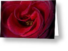 Majestic Rose Greeting Card