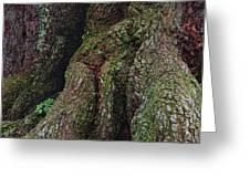 Majestic Tree Trunk Greeting Card