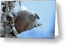 Makakii Ikaika Makani Greeting Card