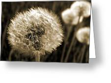 Make-a-wish Dandelion Sepia Greeting Card