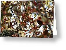 Make An Eternal Spring Greeting Card