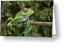 Malagasy Web-footed Frog Boophis Luteus Greeting Card