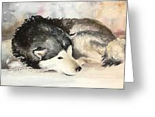 Malamute At Rest Greeting Card
