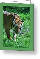 Malayan Tiger # 2 Greeting Card