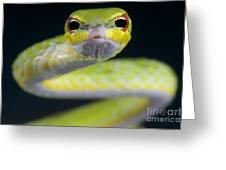 Malayan Vine Snake Greeting Card