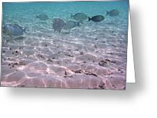 Maldives School Of Tropical Fish Greeting Card