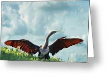 Male American Anhinga  Greeting Card