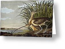 Male And Female Long Billed Curlew Greeting Card