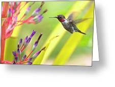 Male Anna's Hummingbird Greeting Card by Mike Herdering