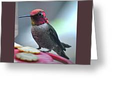 Male Anna's Hummingbird On Feeder Perch Greeting Card