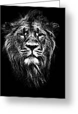 Male Asiatic Lion Greeting Card