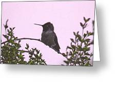 Male Costa's Hummingbird With Mauve Greeting Card