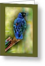 Male Fairy Bluebird Greeting Card
