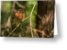 Male Finch In Red Plumage Greeting Card
