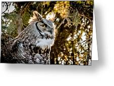 Male Great Horned Owl Portrait Greeting Card