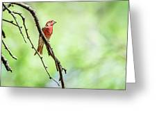 Male House Finch Out On A Limb Greeting Card