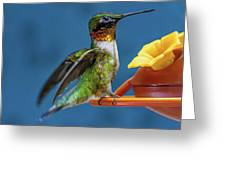 Male Hummingbird Spreading Wings Greeting Card
