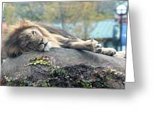 Male Lion Greeting Card