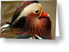 Male Mandarin Duck China Greeting Card