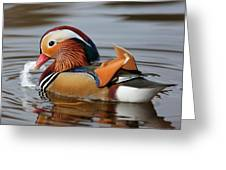 Male Mandarin Duck Greeting Card
