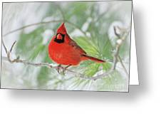 Male Northern Cardinal In Winter - 2 Greeting Card