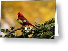 Male Northern Red Cardinal Greeting Card