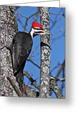 Male Pileated Woodpecker 6340 Greeting Card