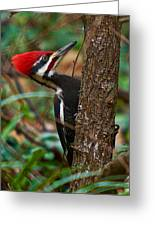 Male Pileated Woodpecker Greeting Card